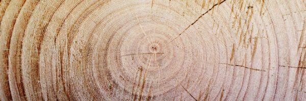 wooden tree stump