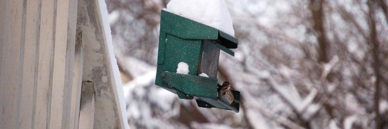 green snowy bird house with bird sitting on it