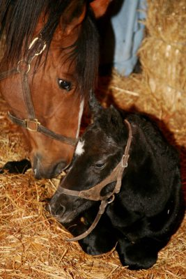 Baby Horse and mother