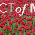 red tulips - Act of Mercy