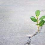 plant growing through a crack in the pavement