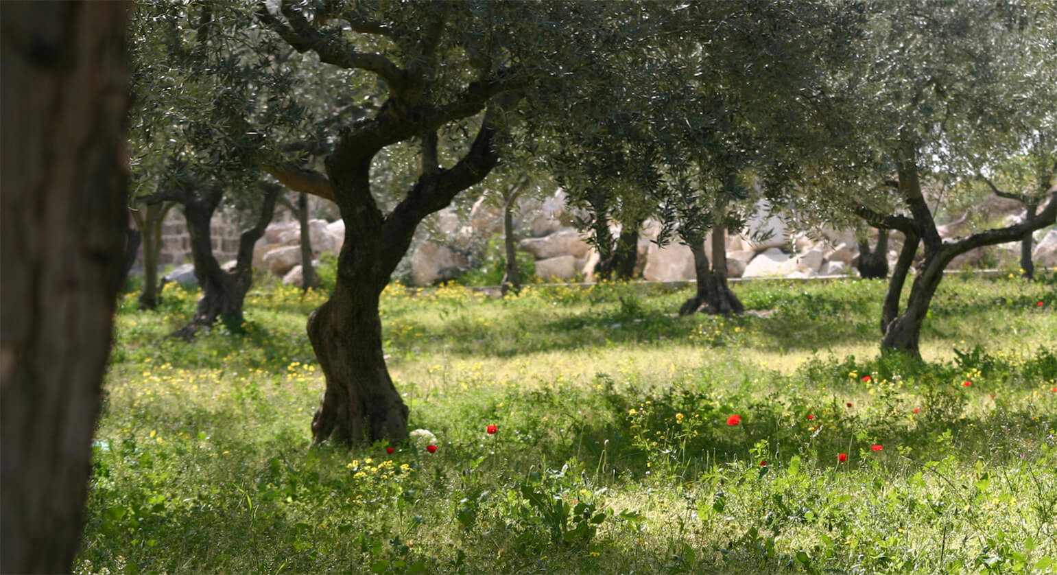 a field of trees and blooming red flowers